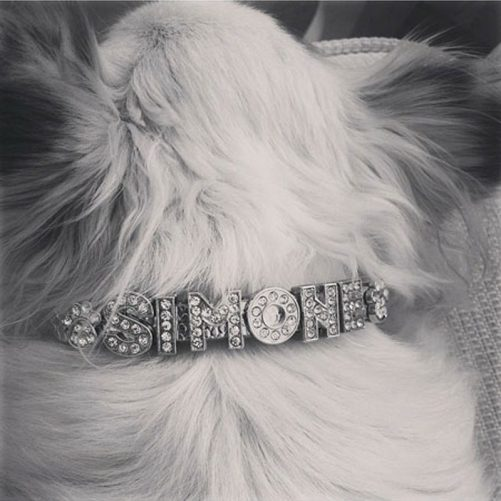 Hundhalsband glitter med namn. LillaFilur.se